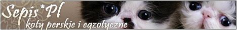 SEPIS - Koty Perskie i Egzotyczne